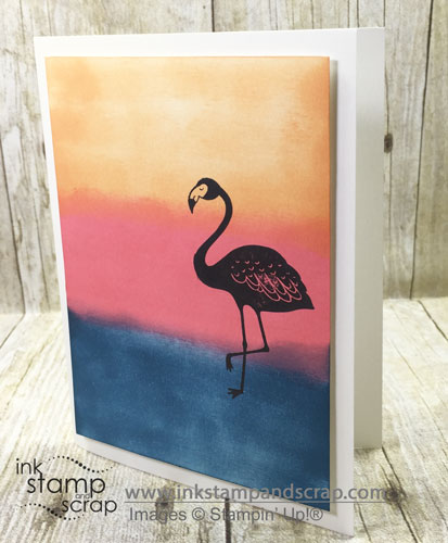 Burnishing Flamingo